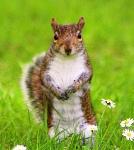 Ghicitori despre veverite