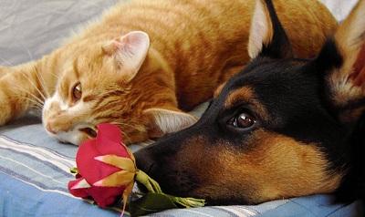 Invata de la animale: prietenia intre caine si pisica