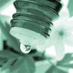 Remedii homeopate impotriva afectiunilor respiratorii ACONITUM, AMMONIUM CARBONICUM, ARSENICUM ALBUM, DULCAMARA, NUXVOMICA, RHUSTOXICO- DENDRON