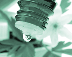 Homeopatia – remedii de iarna
